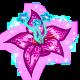 Nova Blossom